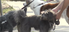 Protecting your pets during Utah's heat wave