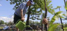 How Salt Lake community gardens plan to keep feeding families during drought