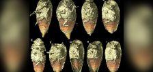 In fossilized dinosaur poop, scientists find hidden treasure