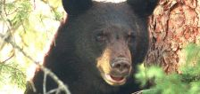 Deadly attacks in the West: How to stay safe from grizzlies, black bears, mountain lions