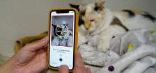 Feline groovy? This app tells you if your cat is happy