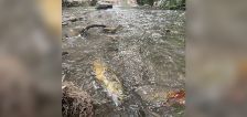 Residents urged to avoid Mill Creek water after concrete spill, 'significant' fish kill-off