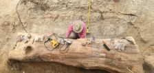 Massive 152M-year-old log fossil recovered from Utah site