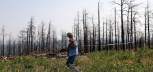 Tree planting efforts aren't replacing burned US forests — not even close