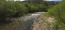 Project aims to clear out nonnative species from Utah native fish haven