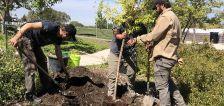 Volunteer arborist group plants new trees at Utah Veterans Cemetery