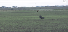 Have You Seen This? Hare leaps over eagle to escape attack